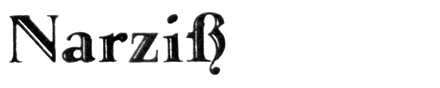 Narziss (Klingspor)