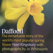 <cite>Daffodil</cite> by Noel Kingsbury