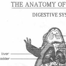 Early MacPaint Demos