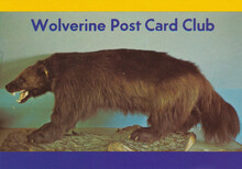 Wolverine Post Card Club postcard