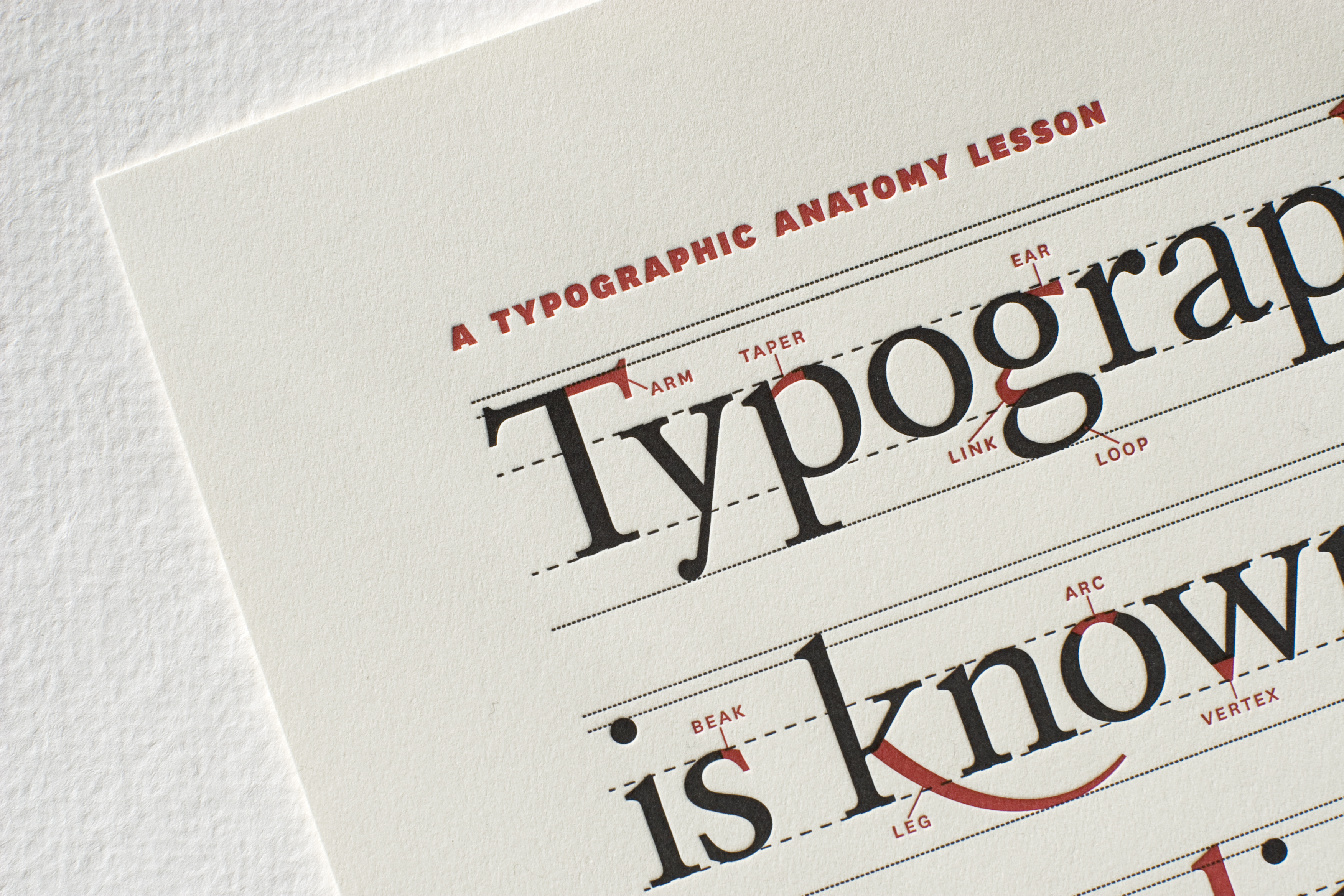 Typographic Anatomy Poster - Fonts In Use
