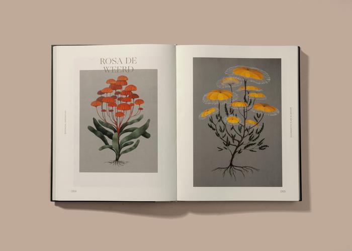 Botanical Inspiration 4