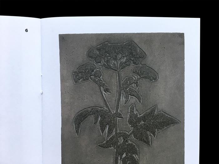 Waldkerbel [woodchervil], woodblock by Fritz Kredel.
