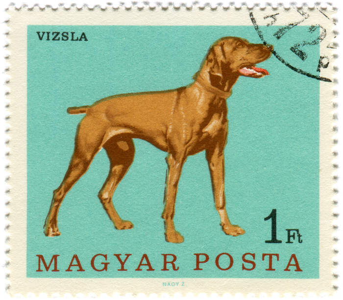 Hungary Postage Stamps: Dogs (ca. 1967) 1