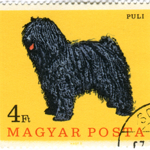 Hungary Postage Stamps: Dogs (ca. 1967)