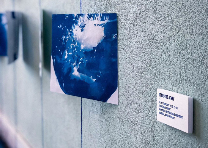 From gränsens arkiv (archive of the border, 2019) 49 cyanotypes à 20×25 centimeters, various papers. Blue yarn from Östergötlands ullspinneri, pine tree branches from the Border Forest that has been coloured blue through the cyanotype technique.