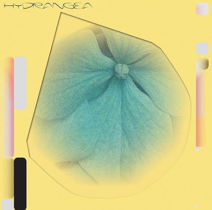 Hydrangea by Holly Childs & Gediminas Žygus album art 1