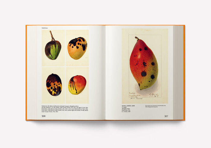 An Illustrated Catalog of American Fruits & Nuts 4