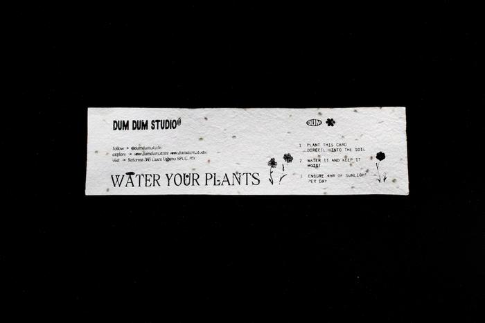 """Water Your Plants"" socks 7"