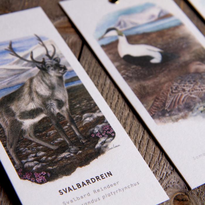 Svalbard Fangst 3