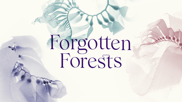 Forgotten Forests 1