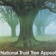 National Trust Tree Appeal Poster