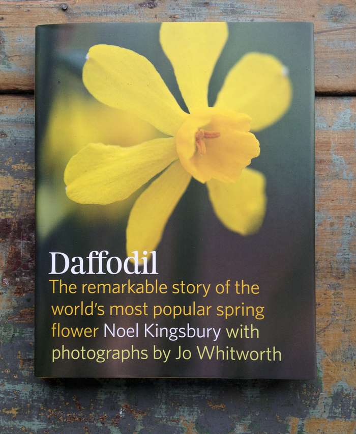 Daffodil by Noel Kingsbury 1
