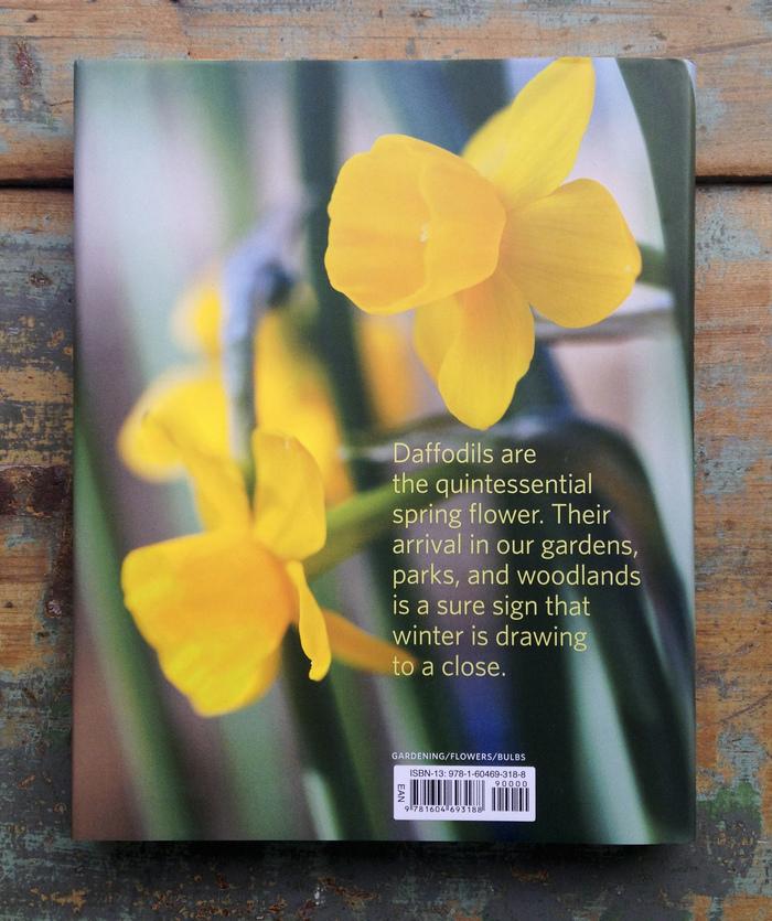 Daffodil by Noel Kingsbury 2