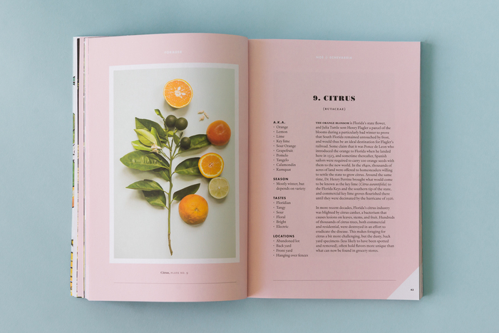 Forager, A Subjective Guide To Miami's Edible Plants 4