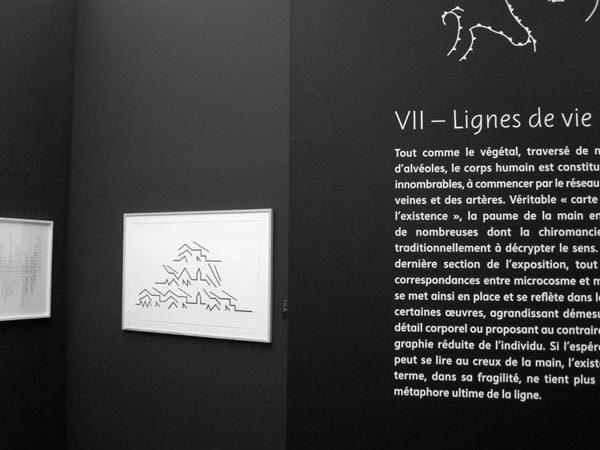 Une bréve histoire des lignes exhibition signage 1