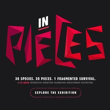 <cite>In Pieces</cite> website