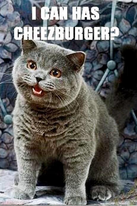 LOLcats internet meme 1