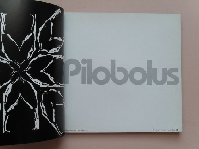 Pilobolus 2