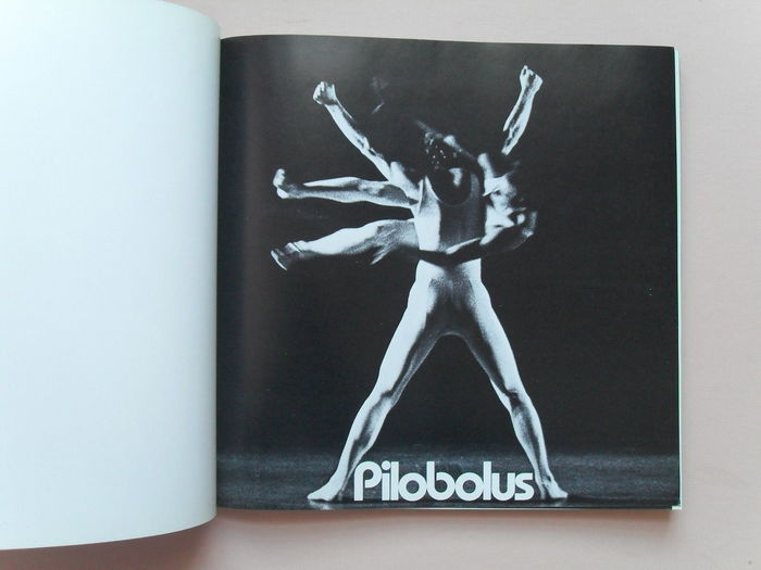Pilobolus 3