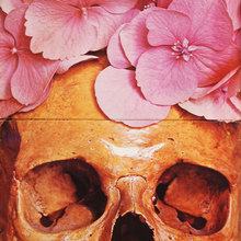 Still Life – <cite>Still Life</cite> album art