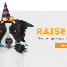 PetSmart Halloween Specials