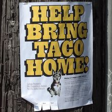 """Help bring Taco home!"" flyer"