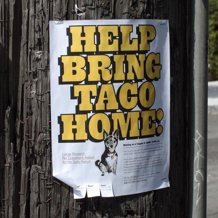 """Help bring Taco home!"" flyer 1"