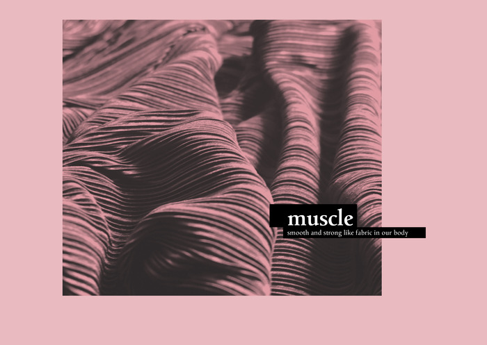 Muscle 1