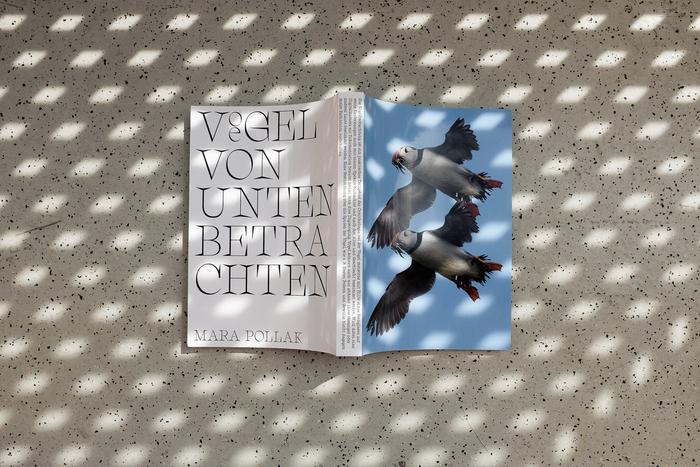Vögel von unten betrachten 4