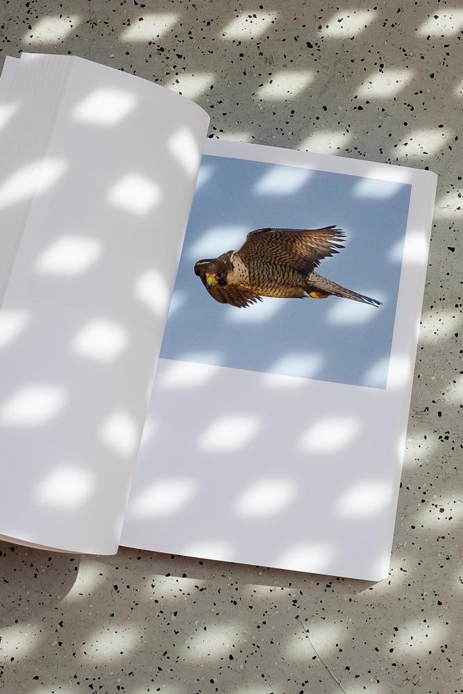 Vögel von unten betrachten 6
