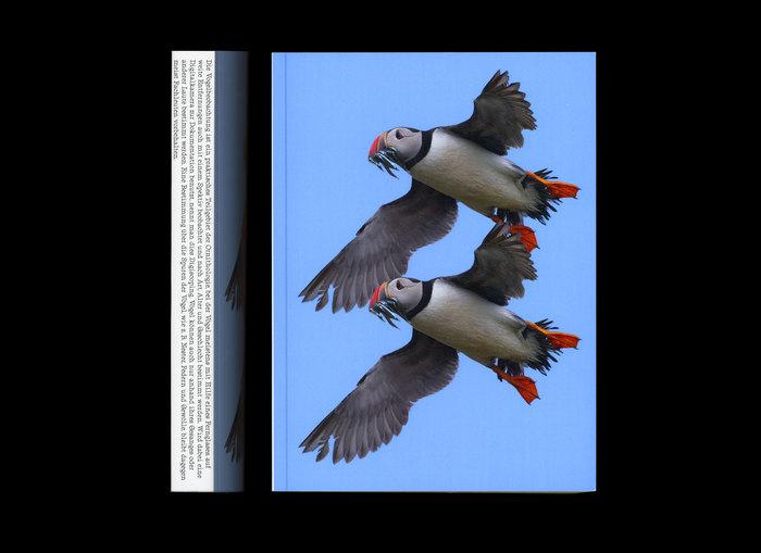 Vögel von unten betrachten 2