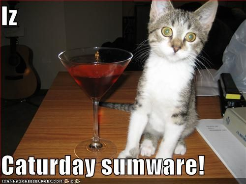 LOLcats internet meme 3