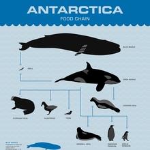 Antarctica poster series