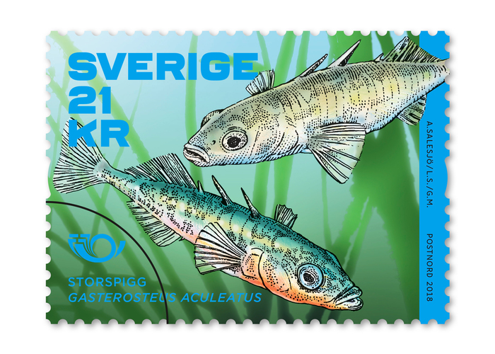 The coil stamp features the Three-spined stickleback. Gotham is used for the species' name.