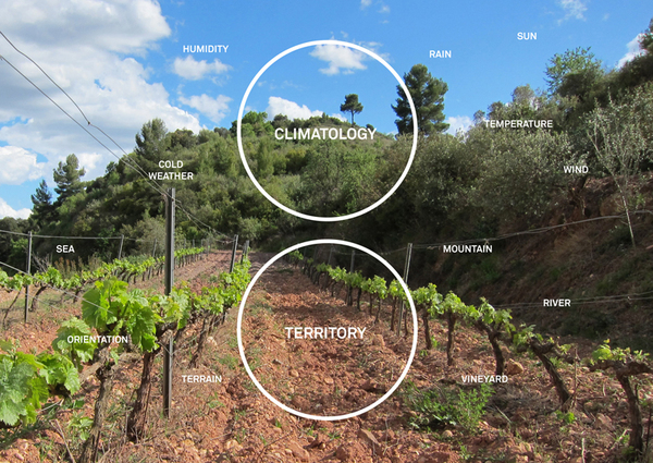 Catalan Wines 6