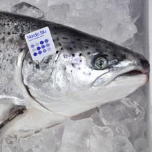Nordic Blu salmon