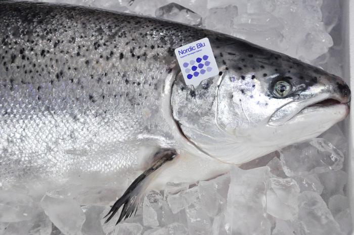 Nordic Blu salmon 2