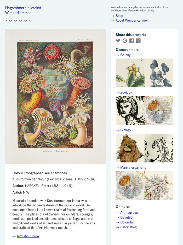 Wunderkammer website 2