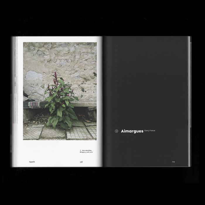 Les plantes et Babylone: Un regard sur les plantes adventices en milieu urbain 7