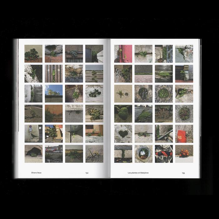 Les plantes et Babylone: Un regard sur les plantes adventices en milieu urbain 8