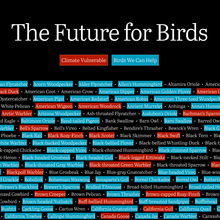 The Future for Birds